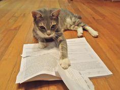 Volevo un gatto: mostlycatsmostly: my cat is my...
