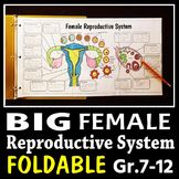 Female Reproductive System - Big Foldable for Interactive Notebooks or Binders Teaching Plan, Teaching Kids, Teaching Resources, Secondary School Science, Classroom Websites, Flower Structure, Female Reproductive System, Teacher Blogs, Teacher Stuff