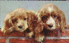 щенки L960 х годов по janwillemsen через Flickr