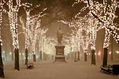Christmas lights along Commonwealth Avenue in Boston, Massachusetts