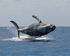 Whale Jump Cook Islands