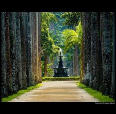 ysvoice:  | ♕ | The magestic alley | by © BB /Juntos Gallery | via magicalnaturetour  Barbosa Rodrigues, the main entrance to the famous Botanical Gardens of Rio de Janeiro.