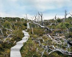 The Oldest Living Things in the World: A Decade-Long Photographic Masterpiece at the Intersection of Art, Science, and Philosophy | Brain Pickings