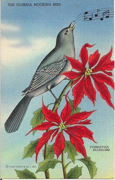 Linen Florida Christmas Postcard Mockingbird Perched on Poinsettia Blossoms