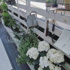 Werbung wegen Accountverlinkung  Noch ein wenig Balkonspam zum Thema #flowers der #living4ic. #living4icflowers Die gefallen mir zu Zeit… Instagram, Cut Flowers, Advertising, Summer Recipes, Amor, Simple, Homes