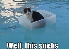 omg... I want to do this to my cat! But, she doesn't so much mind playing with water, she might mind being fully emersed.