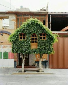 Casa na árvore ou casa de árvore?