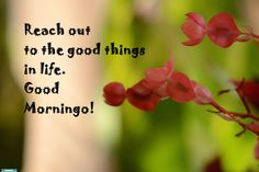 The Secret Wish, The Secret, Good Things, Vegetables, Plants, Vegetable Recipes, Flora, Plant, Planting