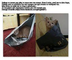 Χάθηκε το γατάκι της φωτογραφία στον Ν. Κόσμο
