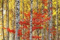 Image result for ruska suomi Felt Pictures, Acrylic Canvas, Contemporary Paintings, Impressionism, Finland, Shag Rug, Landscape Paintings, Craft Projects, Watercolor