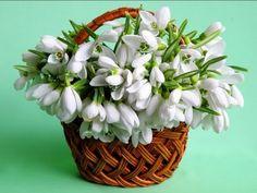 Photo Cool Pictures, Beautiful Pictures, Double Exposure, Amazing Flowers, Winter Wonderland, Peppermint, Flower Arrangements, Succulents, Bouquet