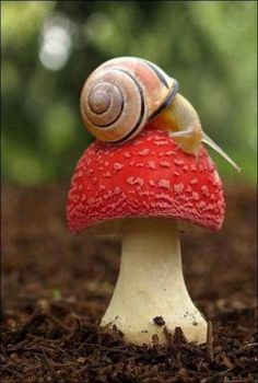 PetsLady's Pick: Cute Snail Exploration Of The Day...see more at PetsLady.com -The FUN site for Animal Lovers