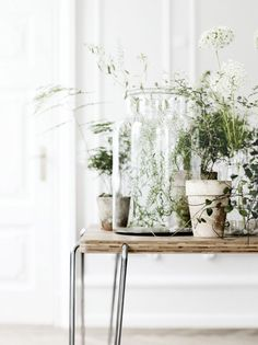 Add some House plants to your next home design project. Lovely table with a number of different potted plants and includes a beautiful terrarium too. Love those plants. Indoor Garden, Indoor Plants, Home And Garden, Potted Plants, Indoor Flowers, Herb Garden, Plantas Indoor, Yellow Photography, Sweet Home