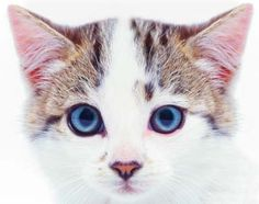 How to Tell if Your Cat Is Sick: General Cat Care Tips: Animal Planet