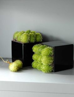 Rambutan in a black glass cube
