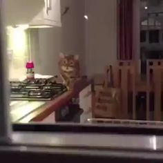I love cats I think they're so funny adorable creatures. I love cats I think they're so funny adorable creatures. Funny Animal Videos, Cute Funny Animals, Funny Animal Pictures, Animal Memes, Funny Cute, Cute Cats, Animal Pics, Hilarious, Video Chat