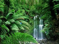 Jungle...waterfall...magical
