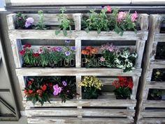 Pallets wall in my garden | 1001 Pallets