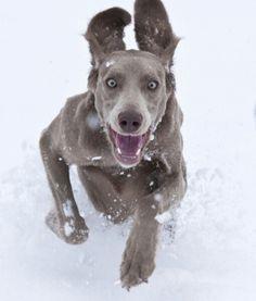 L'hiver!