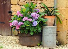 Buitenleven   Hortensia - Tuinplant van de Maand – Stijlvol Styling - WoonblogStijlvol Styling – Woonblog