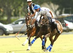 Adolfo Cambiaso's Valiente at the USPA Gold Cup 2014 -