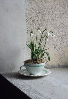 French Teacup Planter // Upcycled Vintage by FrenchAtticFinds