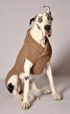 Shawl Collar Ragg Wool Dog Sweater.