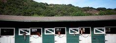 #happyhorses at Stonepine Equestrian Center