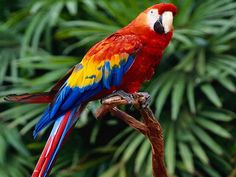 undefined Macaw Wallpapers (34 Wallpapers) | Adorable Wallpapers