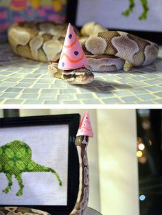Serpientes con sombrero parecen invadir las redes sociales, el nuevo movimiento viral, o la tontada del mes. Ya es algo extraño y poco habitual tener...