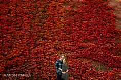 Red ivy wall north side engagement   Pittsburgh Wedding Photographers   Aaron Varga Photography