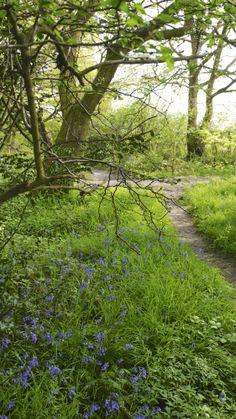 Ploughmans Wood, Lambley