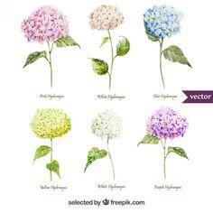 Variedade de flores do hydrangea da aguarela