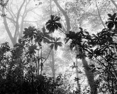 Black and White Nature Print, Rainforest in Costa Rica, Landscape Photography, Minimalist Art, Costa Black And White Sketches, Black And White Pictures, White Photography, Landscape Photography, Night Of The Iguana, Staircase Wall Decor, Nature Drawing, Nature Prints, Minimalist Art