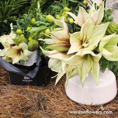 When you're in a hurry, our experts at any one of our seven retail locations are ready to create a fresh, seasonal arrangement just for you.  http://www.winstonflowers.com/Locations