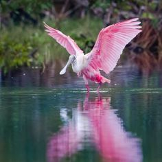 """Daily Destination - January 6, 2014 - The name #Everglades first appeared on a map in 1823, although it was also spelled as """"Ever Glades"""" as late as 1851. You do not have to travel far in order to explore this unique habitat.  Contact our office today to find out more!  (504) 304-9227"""