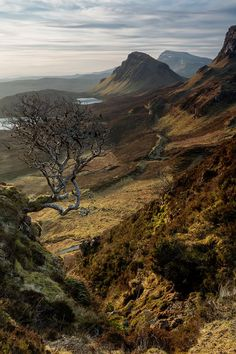 The Quiraing & The Rowan Tree, Isle of Skye, Scotland