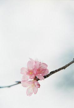 ❀◕ ‿ ◕❀                                                   Flowers blooming