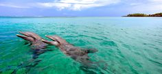 Swim with dolphins in Roatan, Honduras.