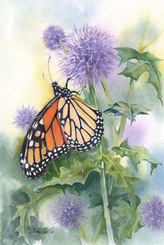 105. Monarch butterfly (Danaus plexippus) Paintings by Toni Kelly