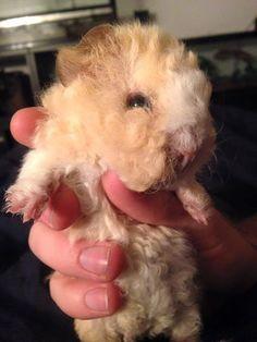 baby piggie!
