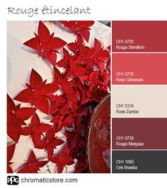 A palette of sparkling invigorating reds for a full kitchen. Color Combos, Color Schemes, Dinner Room, Collor, Texture Painting, Annie Sloan, Geraniums, Feng Shui, Color Inspiration