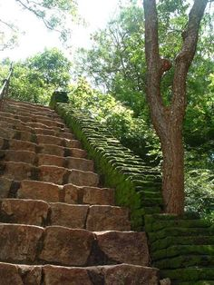 stair Jungle | jungle stairs