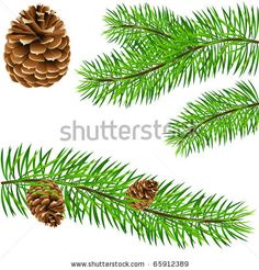 drawings of pine cones and pine boughs   pinecone and pine branches - vector illustration - stock vector