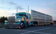 White and teal Peterbilt cow hauler
