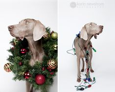 Adorable Christmas Pet Photography // wreath