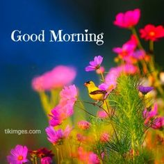 Happy Morning Quotes, Morning Thoughts, Good Morning Greetings, Latest Good Morning Images, Good Morning Images Flowers, Good Morning Photos Download, Miss My Dad, My Beautiful Daughter, Literary Quotes
