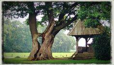 De kroezeboom, Twente