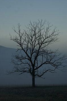 lonesome tree by abennett23, via Flickr
