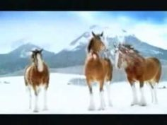 Watch this playful Christmas Clydesdale Budweiser ad that may never be shown in TV again   Rare